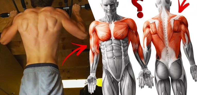 what muscles does pull ups workout